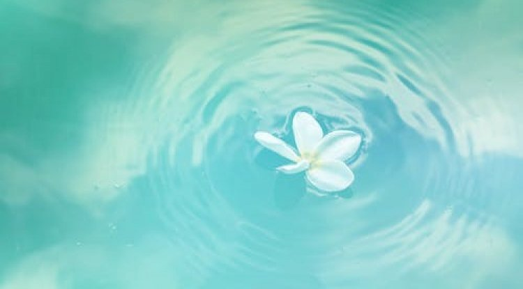 A half-filled bowl with water and floating white flower's petals
