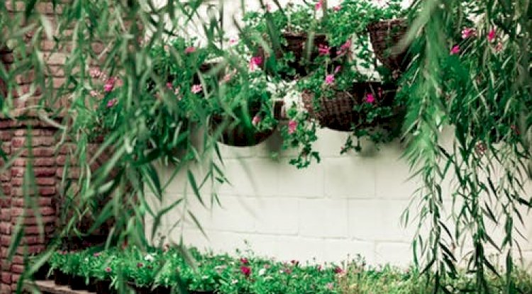 Keeping small and hanging pots of plants